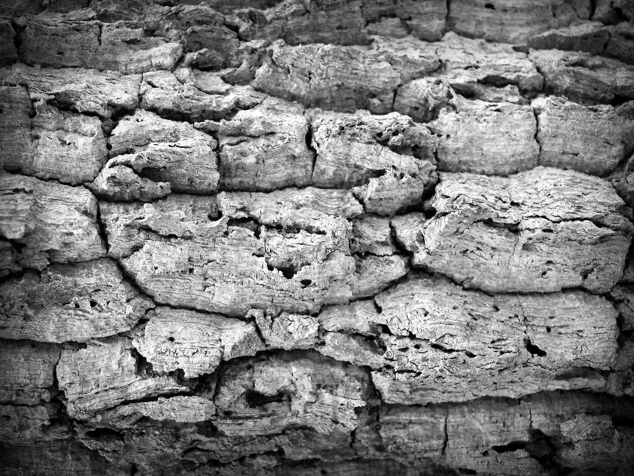 bark 1551238 1280 - Trockene Haut durch Lebensmittelintoleranzen